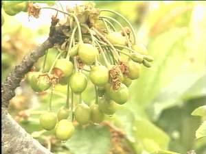 """植物 细胞膜/天达2116的全称是植物细胞膜稳态剂,是国家""""863计划""""在全国..."""
